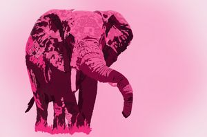 Pink wildlife