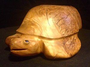 Turtle Island Sea Turtle