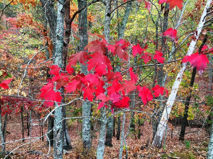 Fall - Melissa Howell