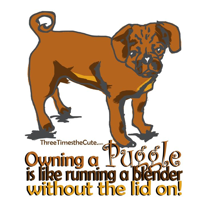 Owning a Puggle - shellyQ photography & art