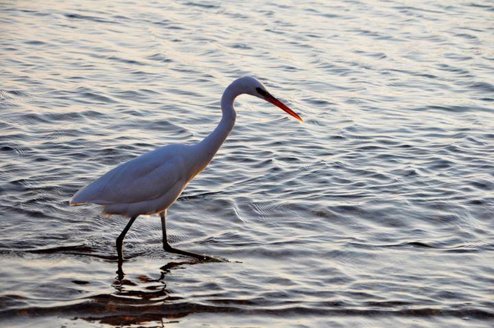 White egret - ArtTochka
