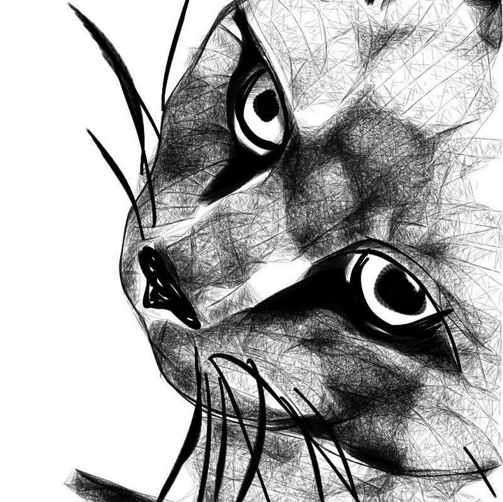 Cat view - Manda Lee
