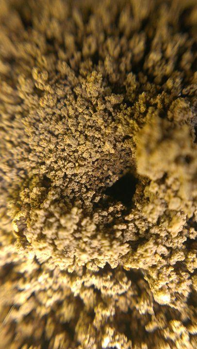 Ant Hole Entrance - RaiceyLee