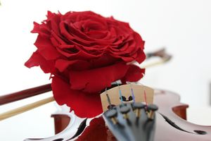 """""""The beauty of music."""""""