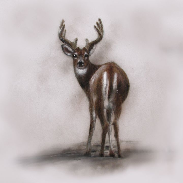 """White tail deer"" Deer beautiful - Jackie Flaten"