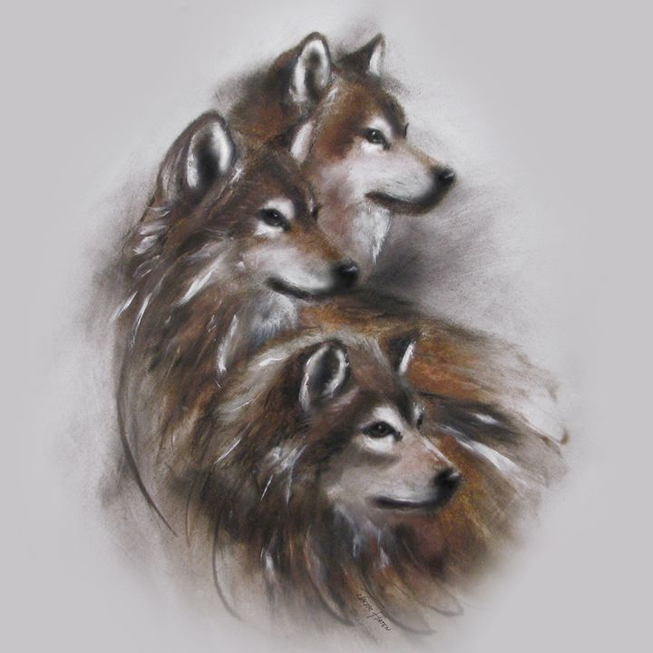 Wolves Wolf Animals - Jackie Flaten