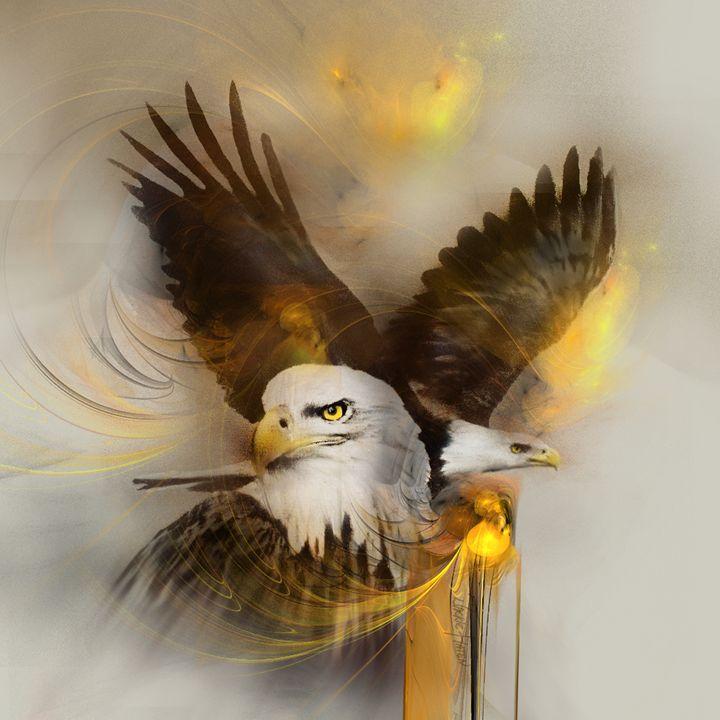 Eagles eagle animal - Jackie Flaten