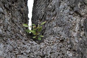 Bush in the tree