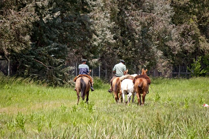 horse workers - Norberto Lauria
