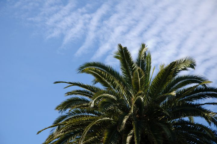Palm tree with blue sky - Norberto Lauria