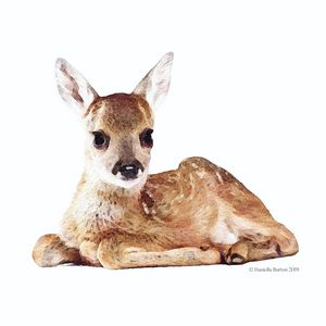 Roe Deer Fawn Watercolour
