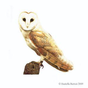 Barn Owl Watercolour Illustration