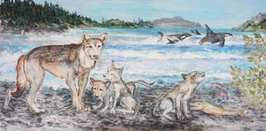 Wild and Free BC Sea Wolves