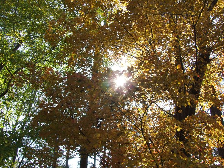 Autumn's Blessings - God's Vision in My Work
