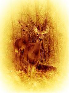 Deer Sightings