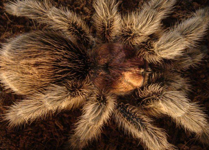 SPIDER FUR! by JEREMIAH KAUFFMAN - LYNN KAUFFMAN