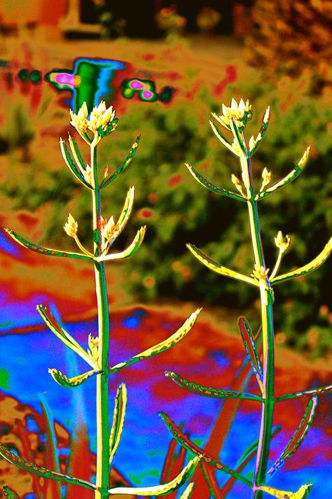 Succulent Abstract 4 - M Diane Bonaparte