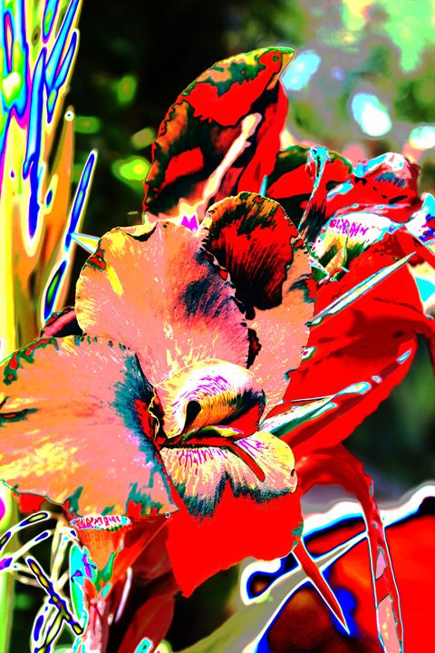 Canna Abstract 7 - M Diane Bonaparte