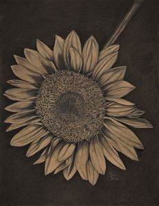 Sunflower - Sean Baker