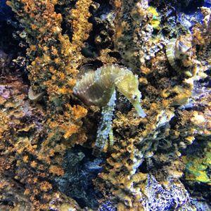 Underwater Vivid Colors