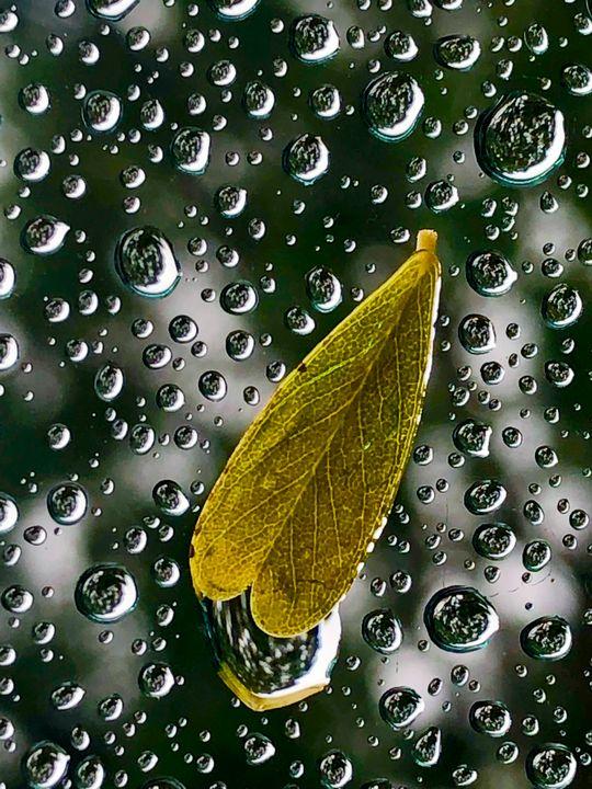 Rain on Window - Eileen Santiago