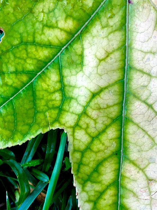 Macro Leaf - Eileen Santiago