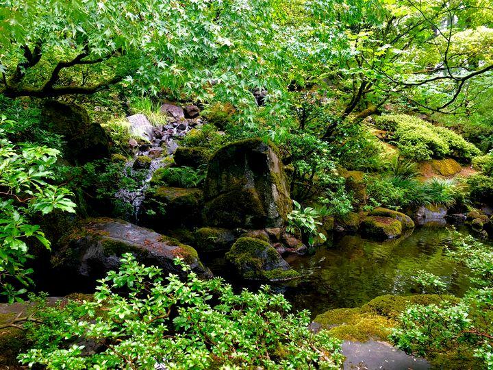 Tranquil Creek - Eileen Santiago