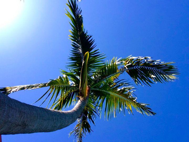 Palm in the Sun - Eileen Santiago