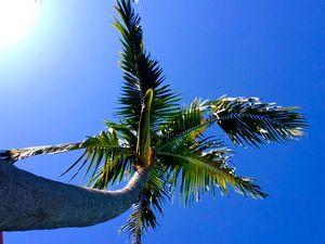 Palm in the Sun