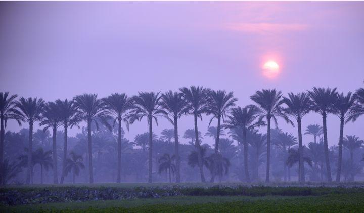 sunset - khaled telmissany