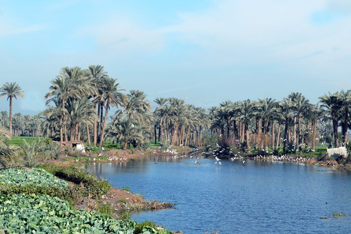 nile in egypt - khaled telmissany