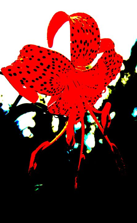 Red Flower - Mark Priory Photography