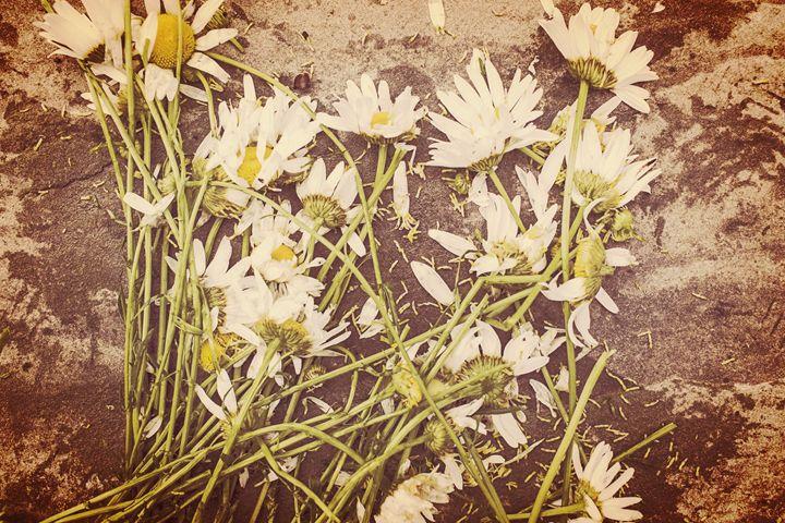 You Belong Among The Wild Flowers - ArtsAndMadness