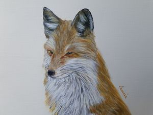 Little fox portrait