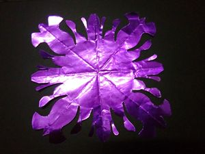 puple flower sun