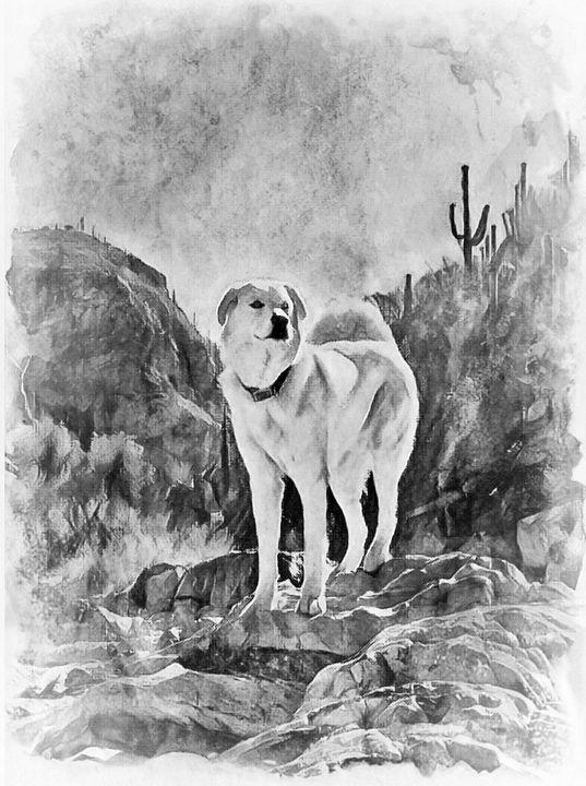 Tucson Desert - Wesley Smith