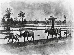 Boy and His Buffaloes, Thailand 1964