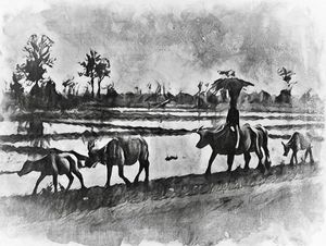 Boy and His Buffaloes, Thailand 1964 - Wesley Smith