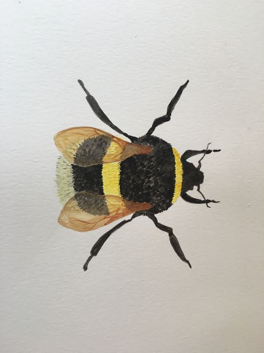 Bee in Watercolour - Stacey Marie Tomkinson Art