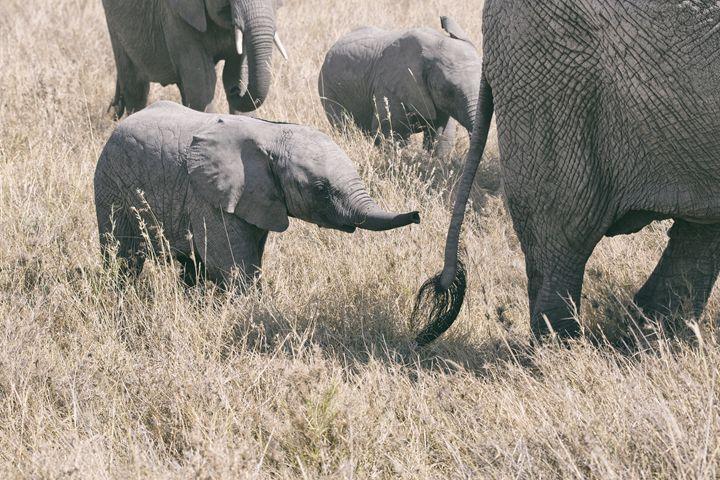 Elephant - Heatherae Photography