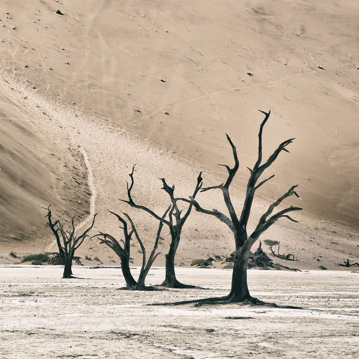 Deadvlei Square - Heatherae Photography