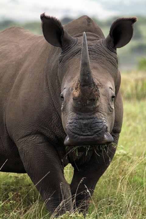 White Rhino - Heatherae Photography