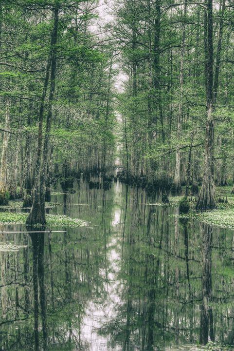 NOLA Swamp - Heatherae Photography