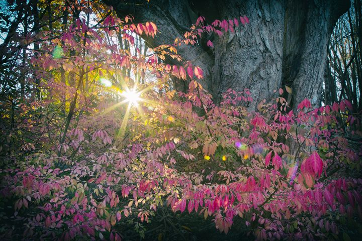 Sunburst - Heatherae Photography