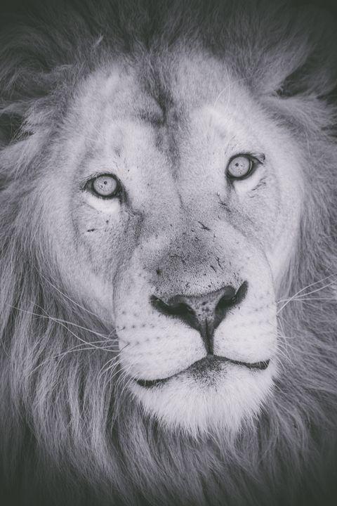 African King - Seeking Venture Gallery
