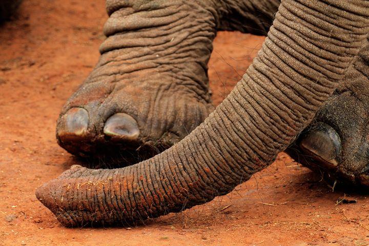 Elephant Trunk - Heatherae Photography