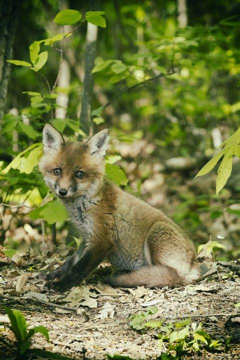 Little Fox - Heatherae Photography