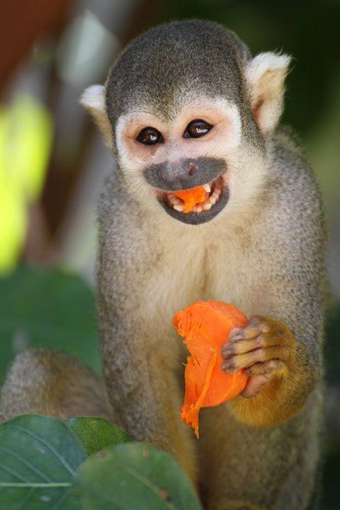 Funny Monkey - Heatherae Photography