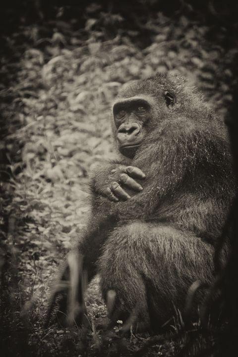 Gorilla Pose - Heatherae Photography