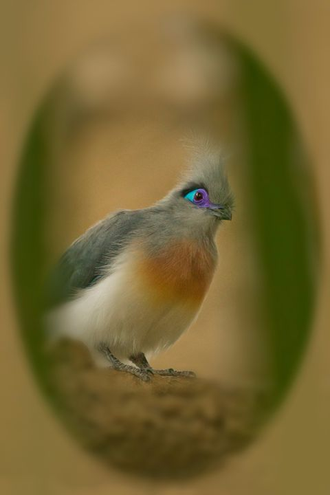 Bird II - Heatherae Photography